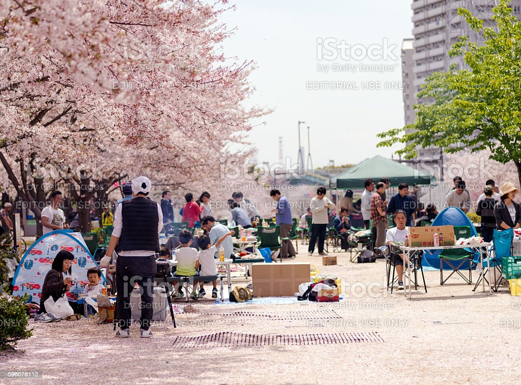 Group of families having barbecue under sakura tree royalty-free stock photo