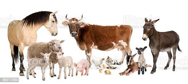 Group of farm animals on a white background picture id93217353?b=1&k=6&m=93217353&s=612x612&h=coteyadfaihnun6gvdtkofxxdg0ybi4nzzlla7hqhqe=
