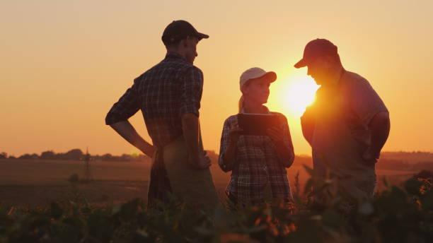 농민의 그룹 필드에는 태블릿을 사용 하 여 논의 하 고. 두 남자와 한 여자 농업에서 팀 작업 - 농업 뉴스 사진 이미지