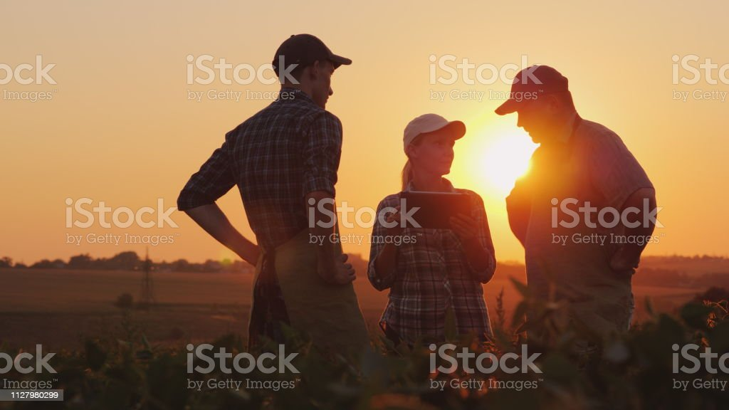 A group of farmers are discussing in the field, using a tablet. Two men and one woman. Team work in agribusiness stock photo