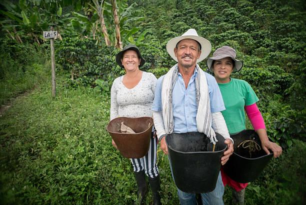 group of farmers collecting coffee beans - coffee farmer foto e immagini stock
