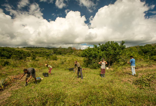 Group of farmers prepare the ground for planting Dramatic sky behind agricultural cooperative stock pictures, royalty-free photos & images