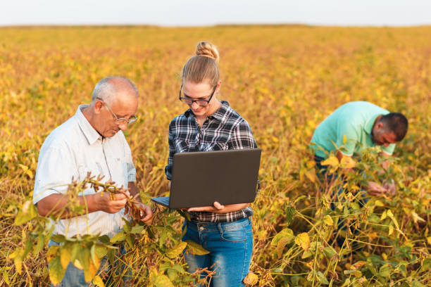 Group of farmers with laptop standing in a field examining soybean crop. Group of farmers with laptop standing in a field examining soybean crop. agricultural cooperative stock pictures, royalty-free photos & images