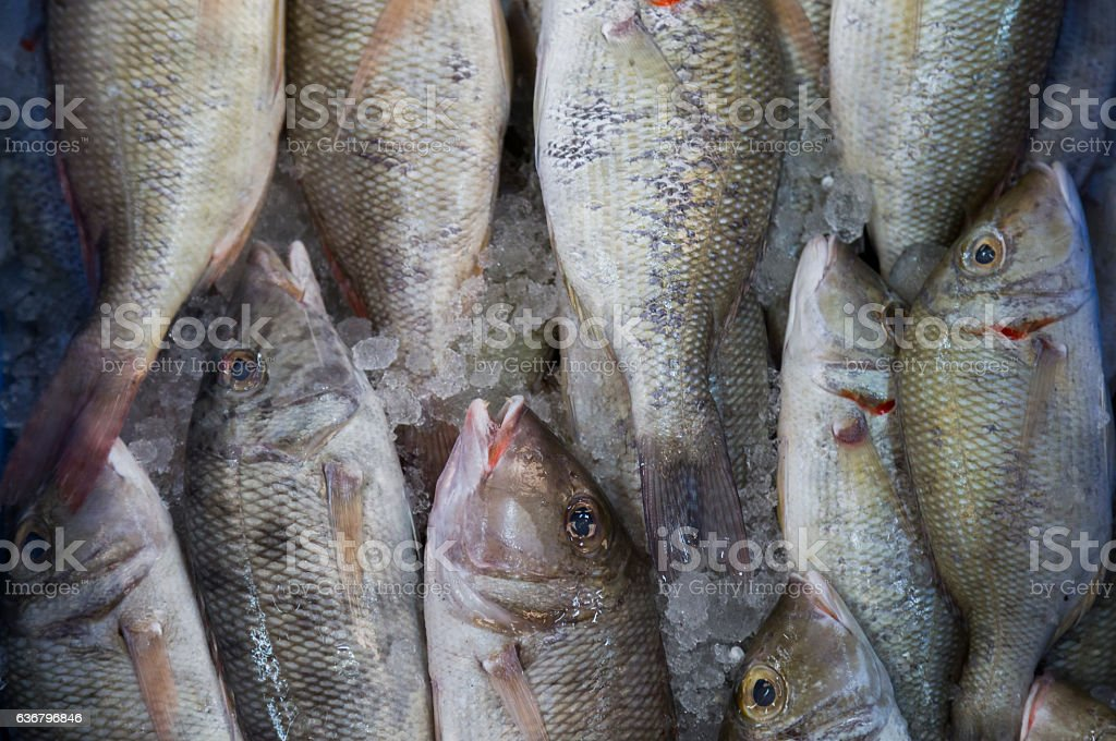 Group of fish arranged in a pattern. stock photo
