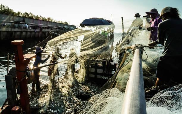 fischer klar fischgruppe aus netz - wasserfledermaus stock-fotos und bilder