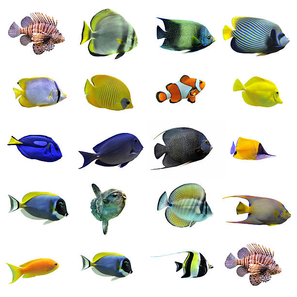 group of fishes  anemonefish stock pictures, royalty-free photos & images