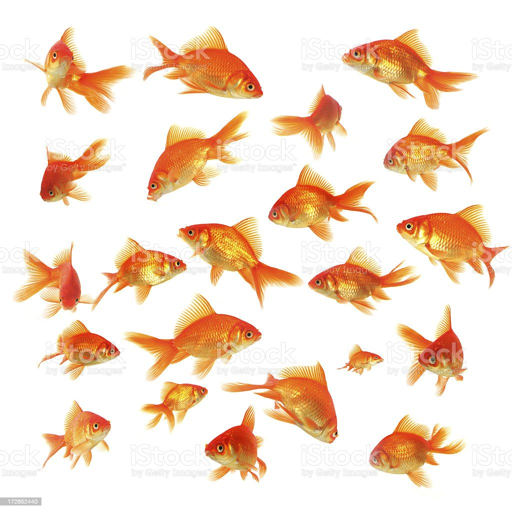 "Group of fishes ""Some are sharps, some are not, some are in motion...."" Abundance Stock Photo"