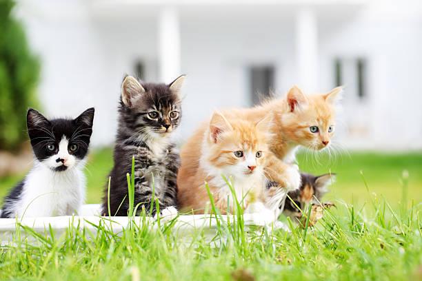Group of five beautiful cats picture id186818761?b=1&k=6&m=186818761&s=612x612&w=0&h=h0ilel8dd1quuqllu9pipeyclfy5romxgimkfj vrqc=