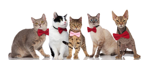 Group of five cute cats with pink and red bowties picture id1048108892?b=1&k=6&m=1048108892&s=612x612&w=0&h=fi5hgoab0 djzyzjapy7wrdqmekazwzwzgr2ogtqs1g=