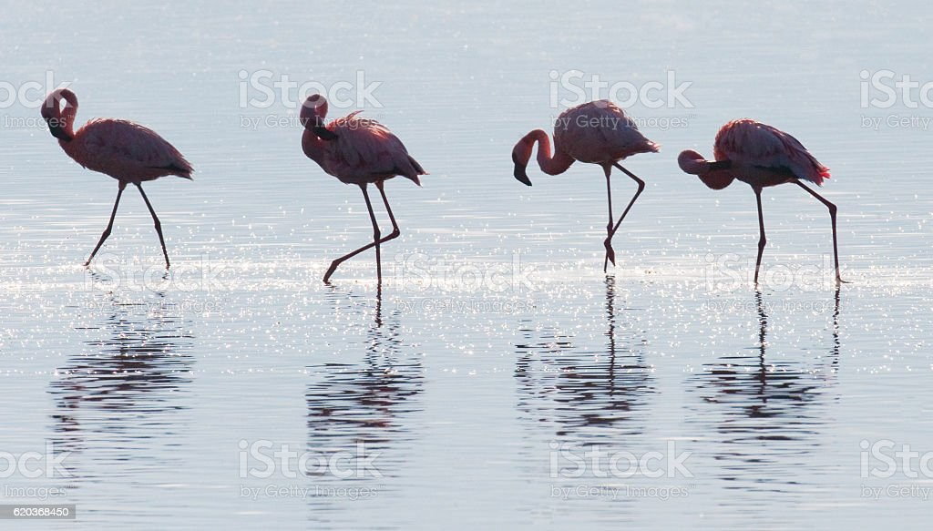 Group of flamingos on the lake. Kenya. foto de stock royalty-free