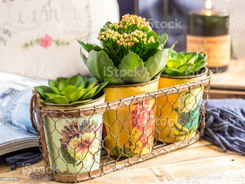 Group of flower pot stock photo