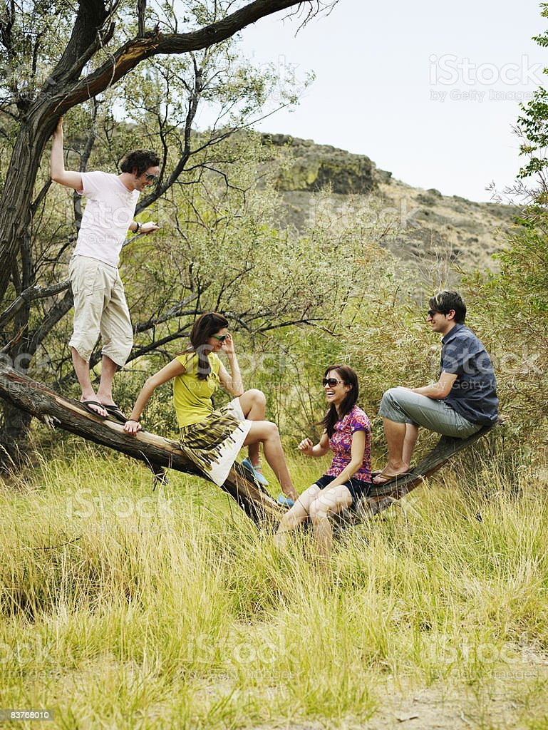 Group of four friends sitting on tree branch royalty-free stock photo