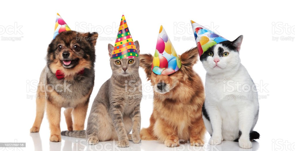 Group Of Four Funny Cats And Dogs With Birthday Hats Royalty Free Stock Photo