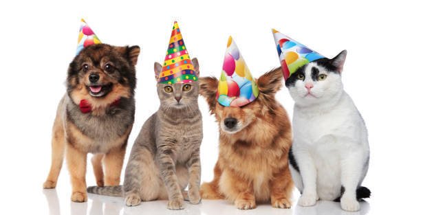Group of four funny cats and dogs with birthday hats picture id1022259116?b=1&k=6&m=1022259116&s=612x612&w=0&h=msvqgehsdhexv8 qbgxv 3lmzsdyxyt3emvst1gm1ay=