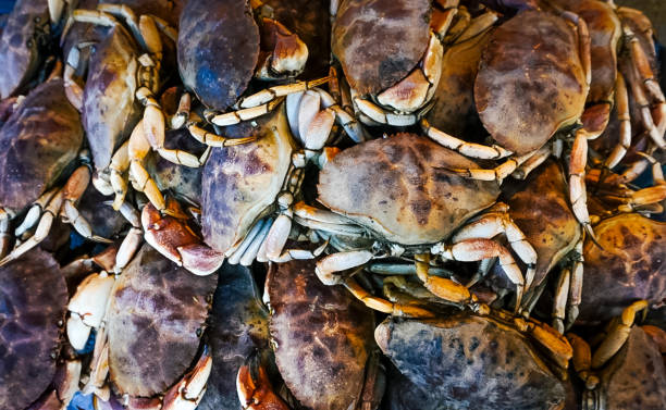 A Group of Fresh Crabs stock photo