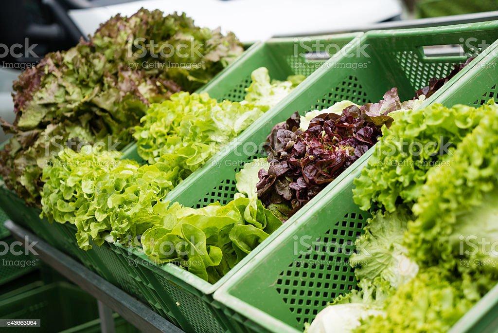 Group of fresh lettuce salad at market stock photo