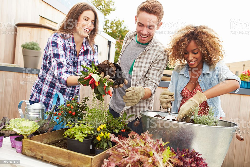Group Of Friends Planting Rooftop Garden Together stock photo