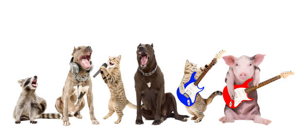 Group of funny animals musicians picture id1010221218?b=1&k=6&m=1010221218&s=612x612&w=0&h=d1hoheev1mmzsewfxj3tcorazdizuilpo pai13zxbm=