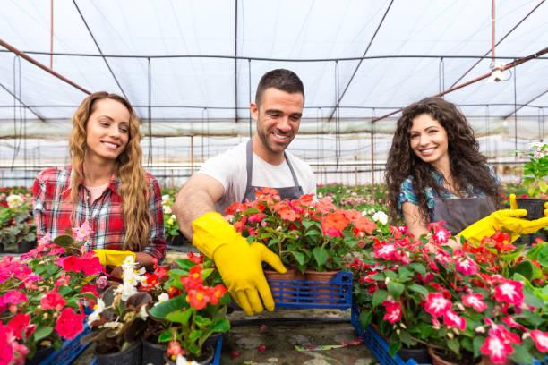 groep van tuincentrum werknemers - torch lily stockfoto's en -beelden