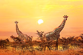 Group of giraffes on sunset background.