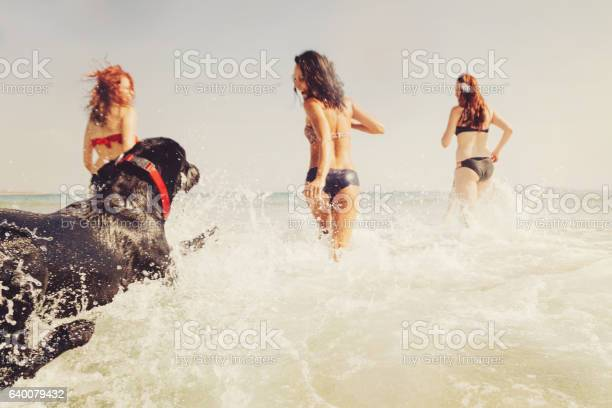 Group of girls and a dog running in the sea picture id640079432?b=1&k=6&m=640079432&s=612x612&h=ewt20624mjgytffktz4hugi7m2gqrzo3y6ttvuic3ro=