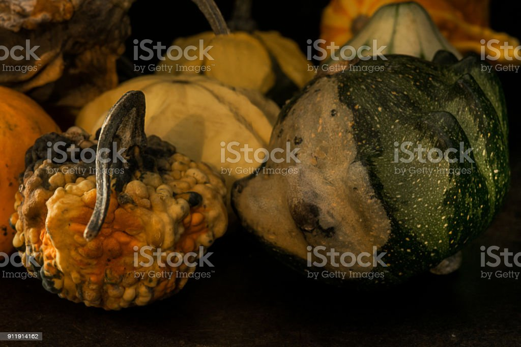 Group of gourds with different colours stock photo