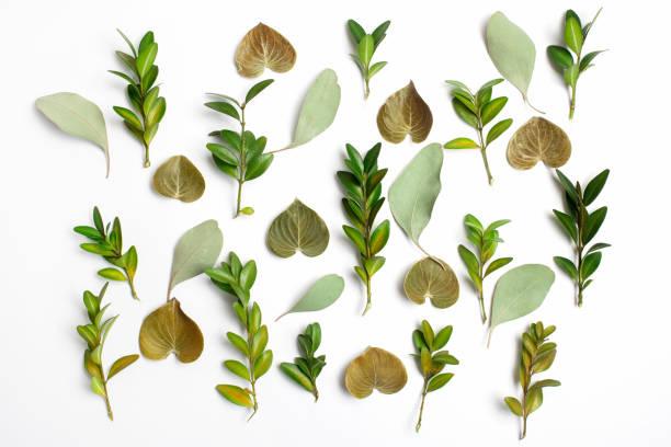 gruppe von grünen blatt hintergrund. flach zu legen - blumendrucktapete stock-fotos und bilder