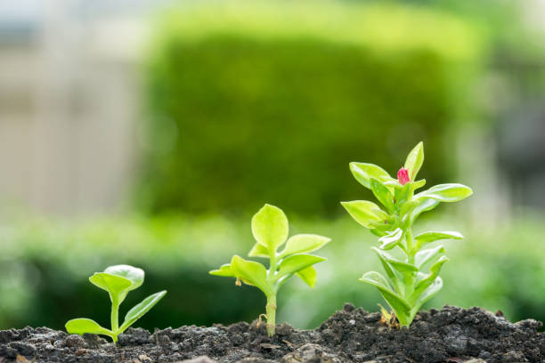 Group of growing trees on soil - growth concept. stock photo