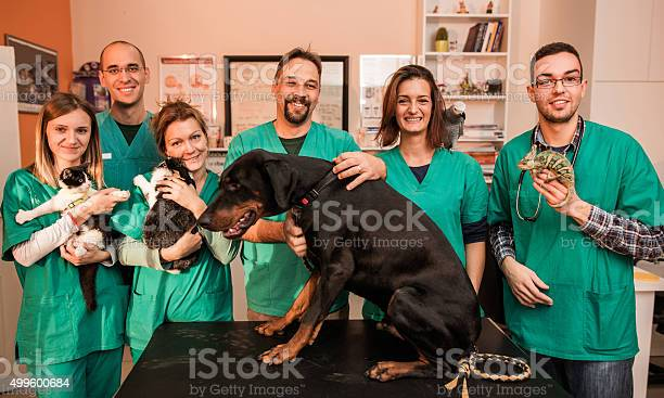 Group of happy veterinarians with animals at vets office picture id499600684?b=1&k=6&m=499600684&s=612x612&h=h  9wt3aayyefnhlifa2ozxmmiqflt2ouz4b7qrucou=