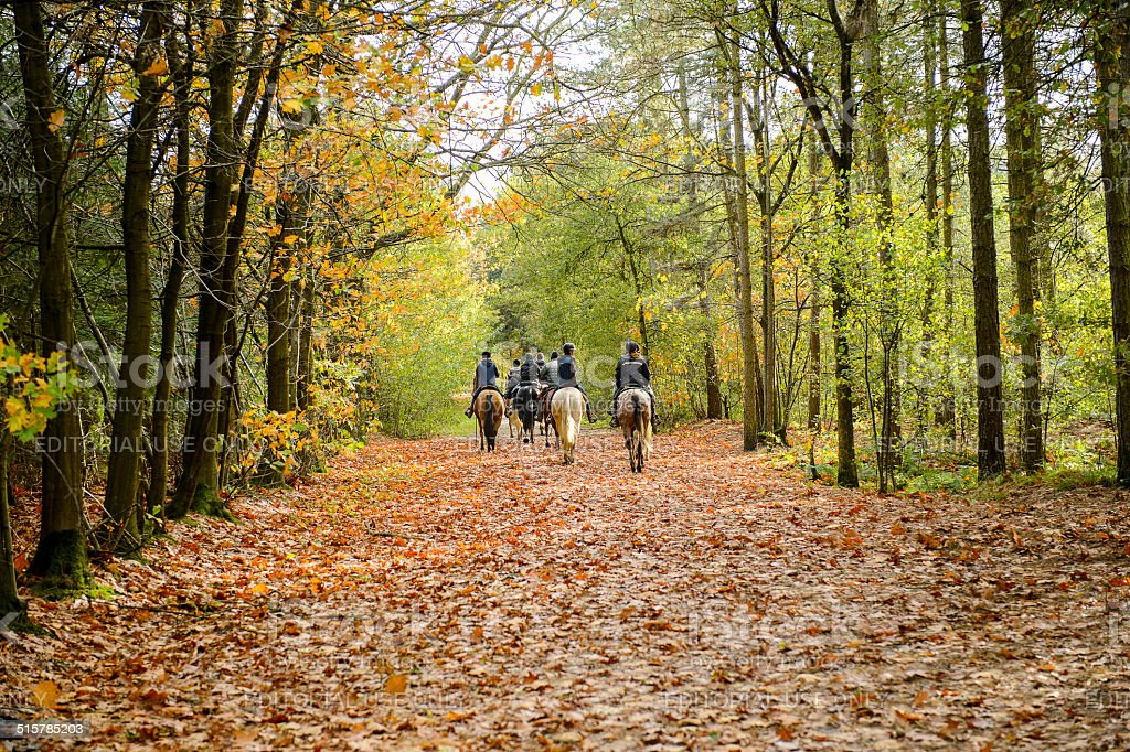 Group of horse riders in the forest stock photo