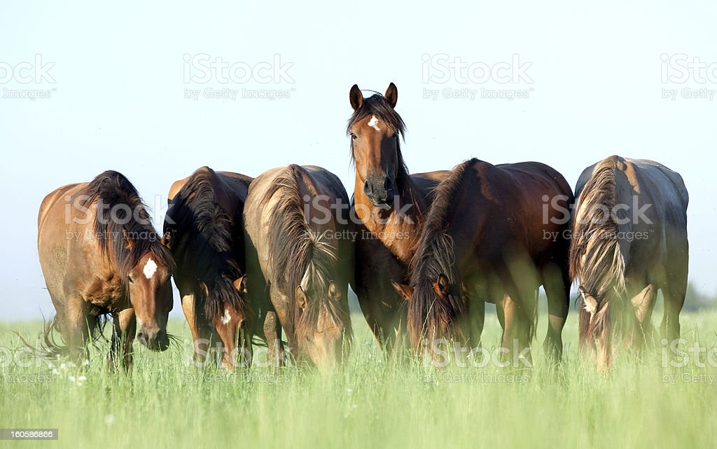 Group of horses grazing in a meadow. stock photo