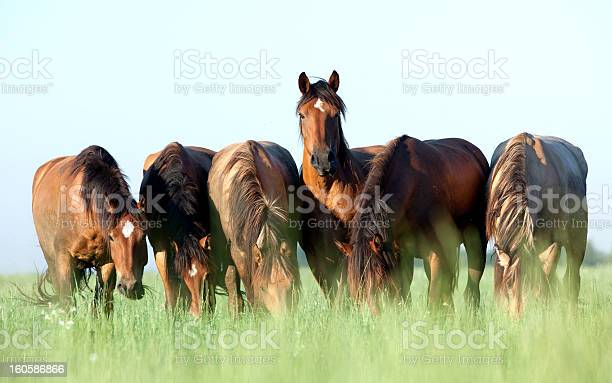Photo of Group of horses grazing in a meadow.