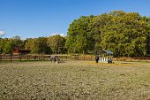 Group of horses on rest in field. Animals concept. Beautiful animals backgrounds.