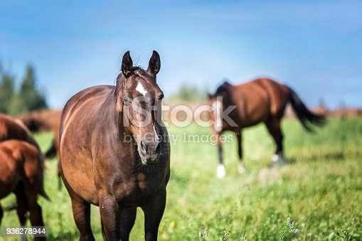 Herd of horses running on the spring pasture.
