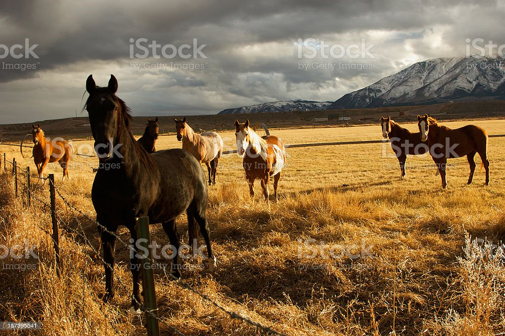 Group of Horses royalty-free stock photo