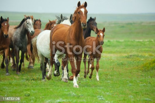 istock A group of horses running through a field 118233126