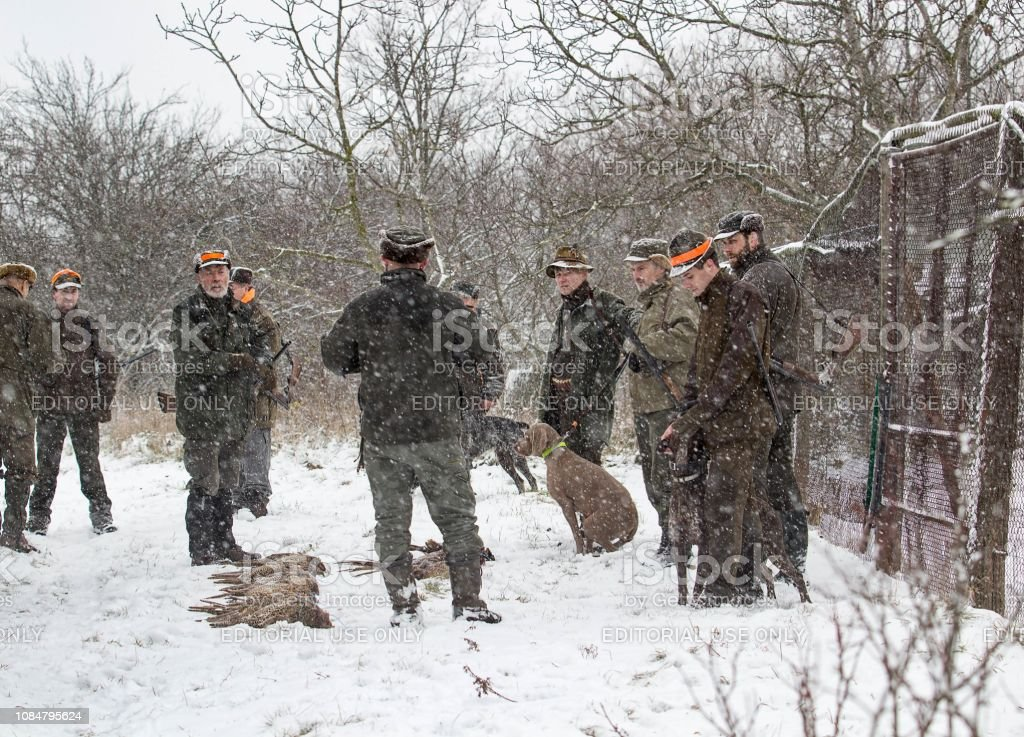 Group of hunters with dogs and shotguns stock photo