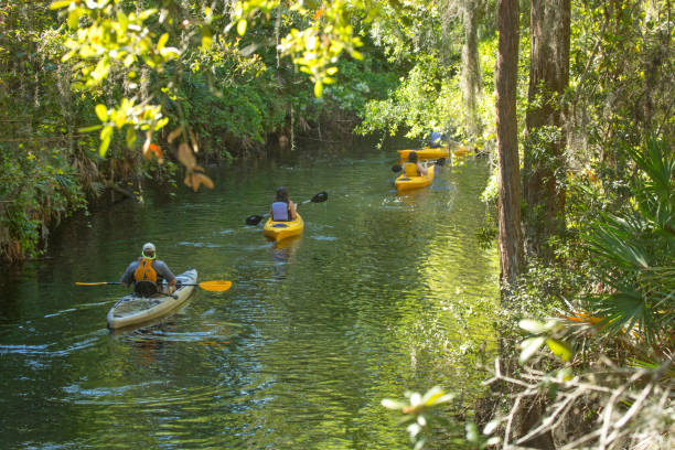 group of kayakers on shingle creek in kissimmee, florida. - kissimmee stock photos and pictures