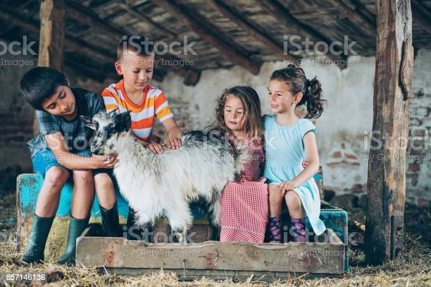 Group of kids with a goat in the barn picture id857146136?b=1&k=6&m=857146136&s=612x612&h=jcrq  nwjbv o wfochu8l6lb7 69tifmcysjldswus=