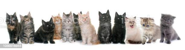Group of kitten picture id1056616944?b=1&k=6&m=1056616944&s=612x612&h=cyjknu3hkwmwnkgq exltsqe90cdtk3dfoxzueteorg=