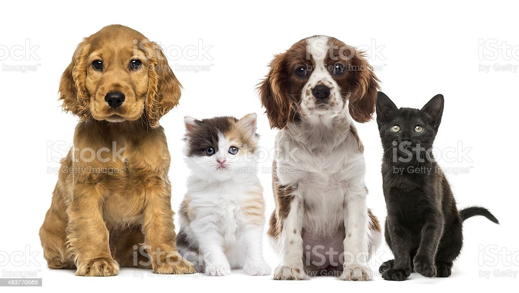 Group of kittens and dogs stock photo