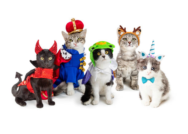 Group of kittens wearing halloween costumes picture id1066732302?b=1&k=6&m=1066732302&s=612x612&w=0&h=uhbuhgs3p8flklhelfnfmus7nroyuefoxegcsfqioms=