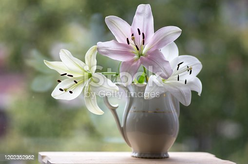 Group of light white and pink lilies in vase, beautiful flowering flowers indoors on the window in white vintage ceramic pitches