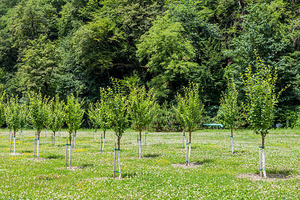 group of little trees growing in garden - piantare foto e immagini stock