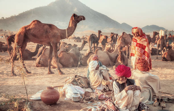 A group of male camel traders wearing traditional clothing and turbans in their open-air camp in the early morning at the annual Pushkar Camel Fair in Rajasthan, India. stock photo