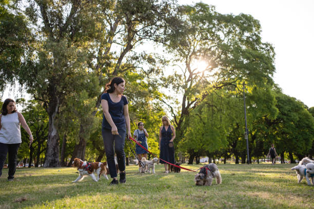Group of mid-adult women walking their dogs at a public park stock photo