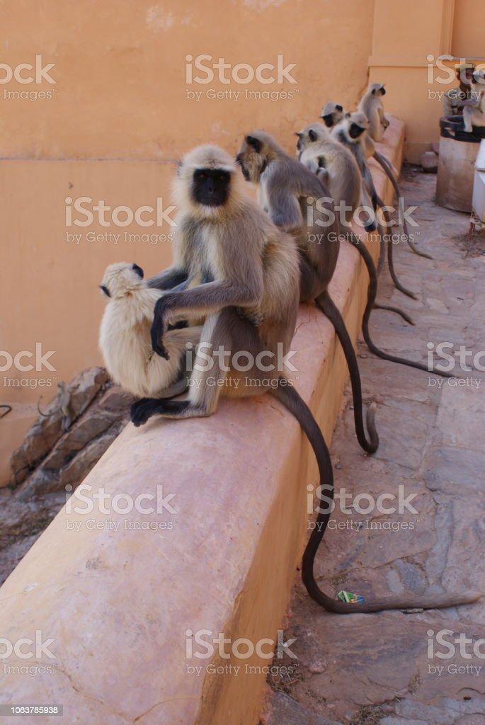 Group of Monkeys stock photo