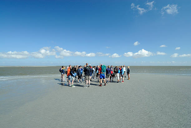 group of mud flat hikers in the netherlands - 泥灘 個照片及圖片檔