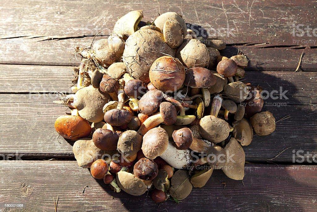 그룹 버섯 임산 한 자연 백그라운드 royalty-free 스톡 사진