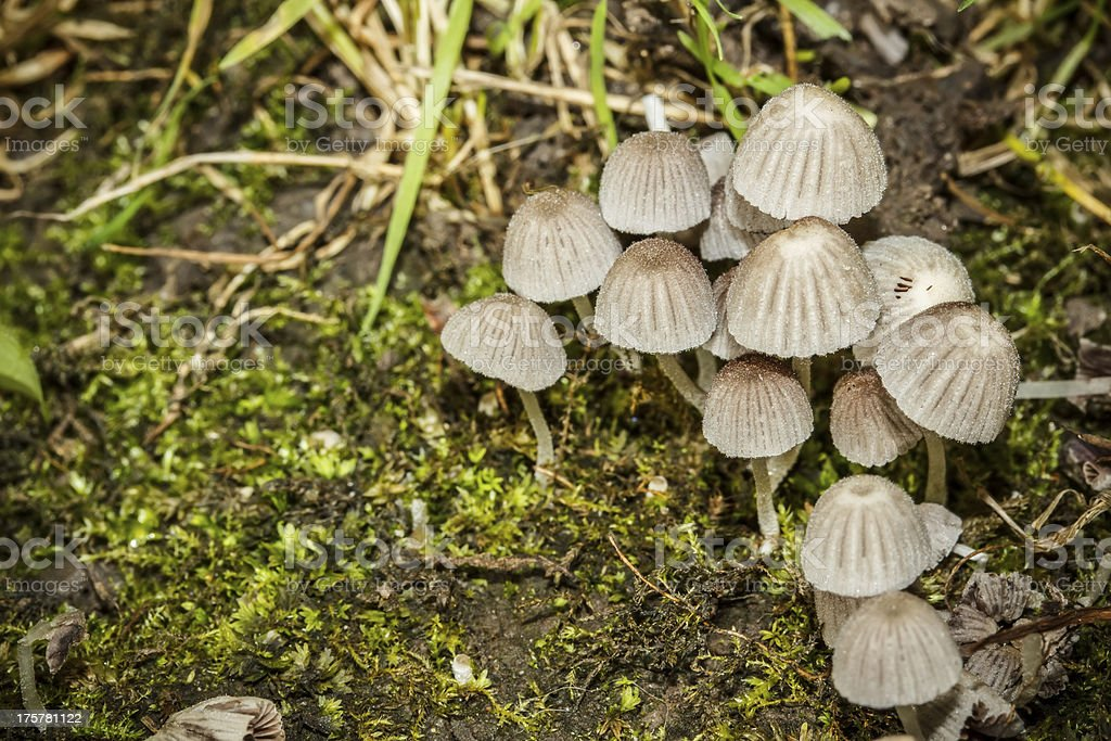 Group of mushrooms royalty-free stock photo